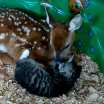Our Favorite Baby Animal Snuggling Moment (VIDEO)
