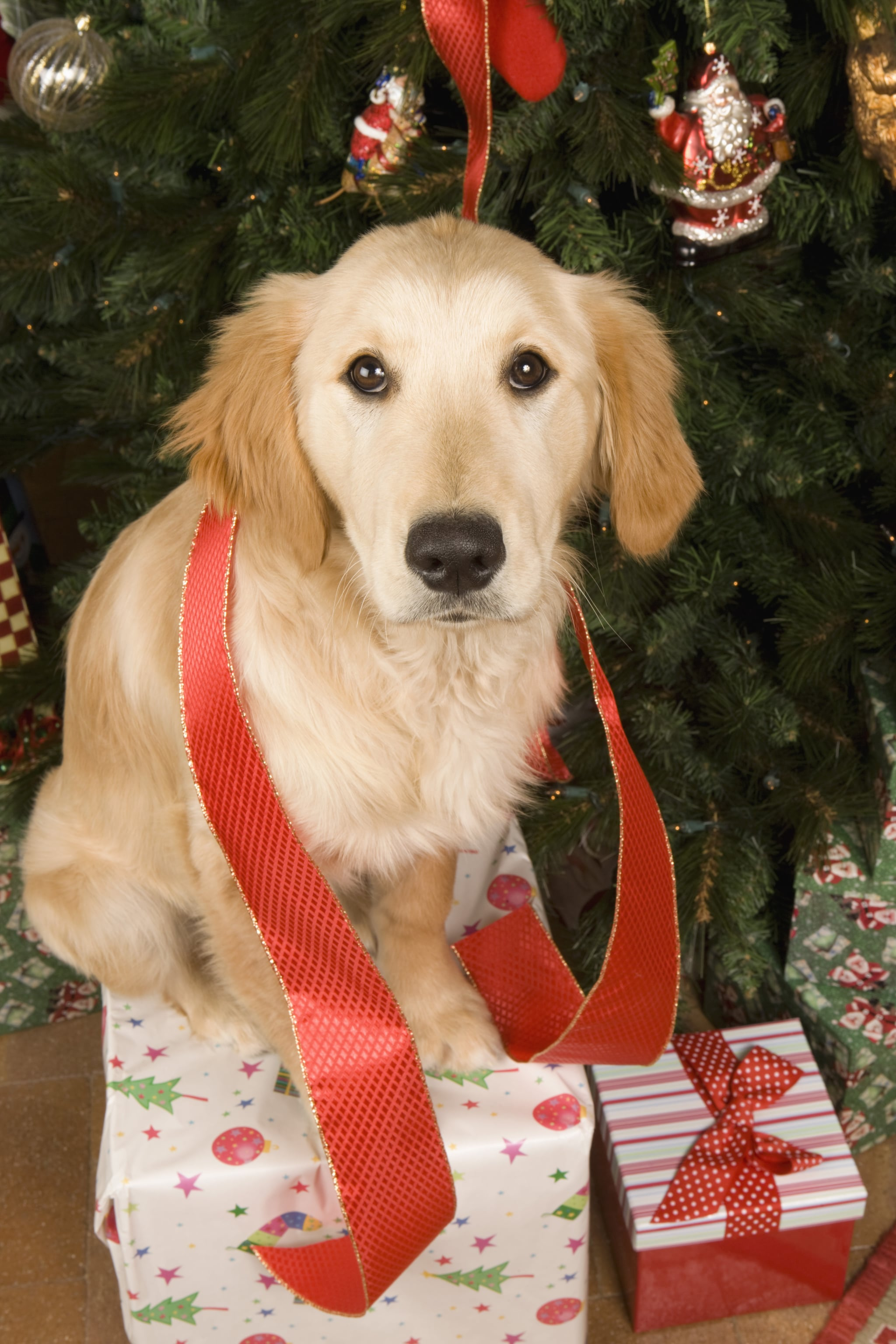 Cute Pictures Of Christmas Puppies Popsugar Family