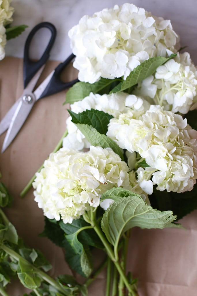 9 Facts Every Hydrangea-Lover Needs to Know