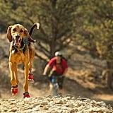 Grip Trex Dog Boot Pairs