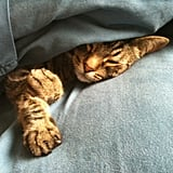 Financial Analyst Tonny Solaeman's tabby cat, Tobey, likes to relax between the sheets.