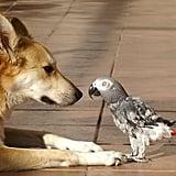 Hey, Birdie!