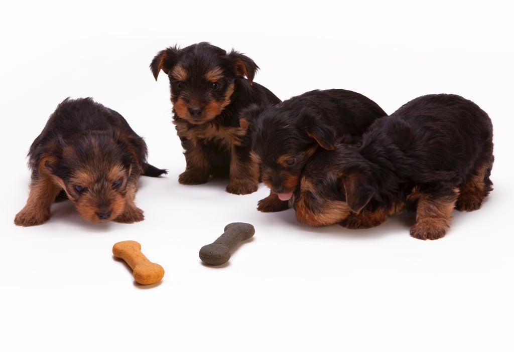 sc 1 st  Popsugar & Cute Photos of Dogs | POPSUGAR Moms