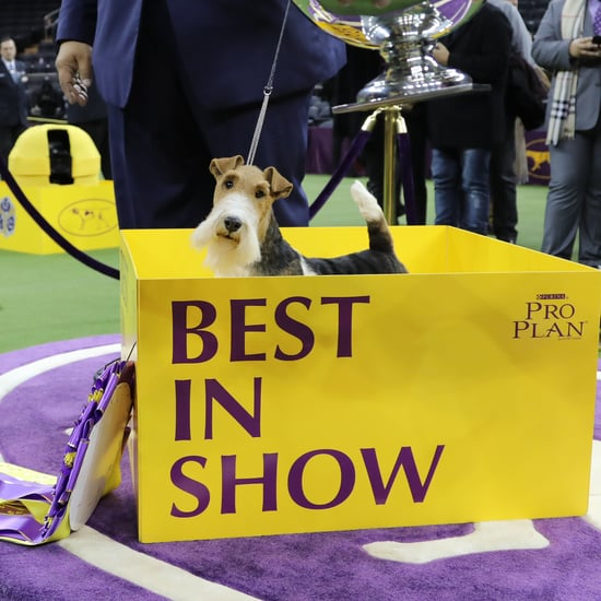 What Really Goes Into Being a Show Dog?