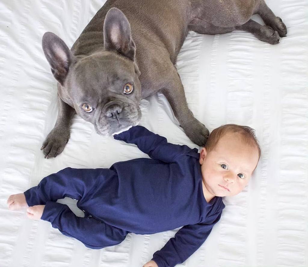 "I'm a lover of all dog breeds, but there's something about a French bulldog that instantly makes me squeal in delight — and these photos of Frenchies with babies are double the adorable. Whether baby is snuggling with their Frenchie, looking at them adoringly, or sitting next to them on an oversize chair, each and every one of these photos of little human babies with their fur BFFs are too much to handle. Read through for photos of puppies and babies that should 100 percent be what's in the dictionary under the word ""cute"" (and then check out how many tennis balls this hilarious golden retriever can carry in his mouth at once).      Related:                                                                                                           This Photographer Did a Newborn Shoot With a Baby French Bulldog, and MY HEART"
