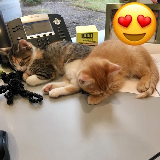 Office's Kittens Debit and Credit Playing in Box | Video