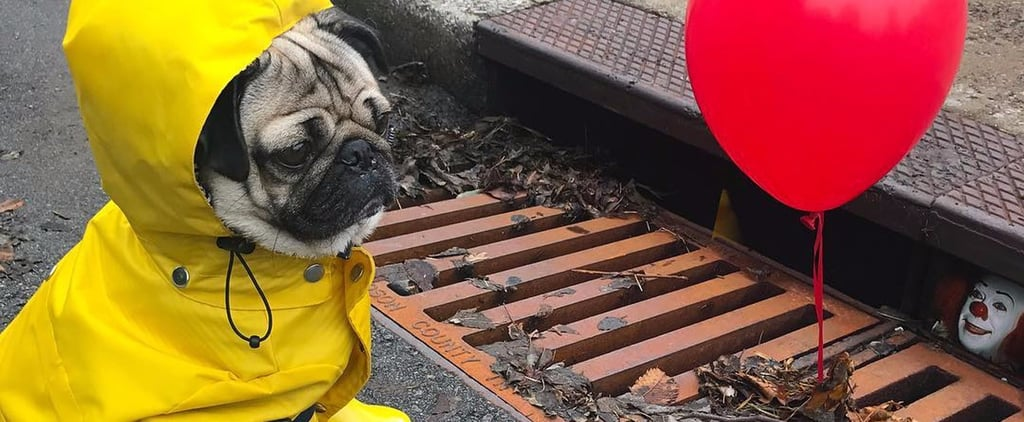 This Adorable Pug Remake of It Is the Nonscary Version That Wimps Deserve