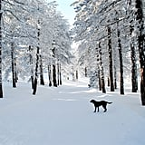 A dog stood in the snow-covered streets on Cyprus, an island in the Mediterranean.