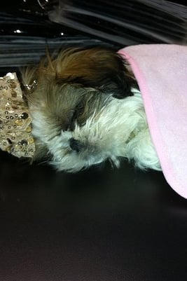 Pet Pic of the Day: Sleeping Beauty
