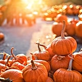 Visit a Pumpkin Patch
