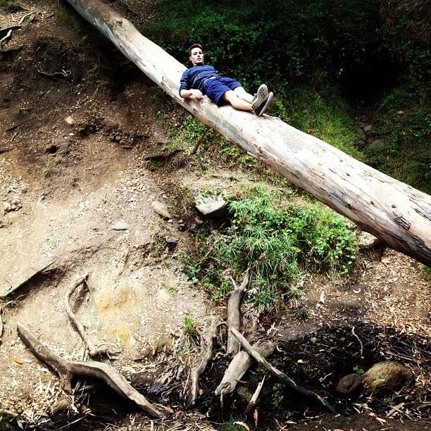 This Gigantic Fallen Tree