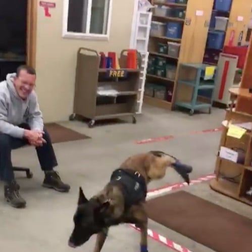 Video of a Police Dog Wearing Shoes For the First Time