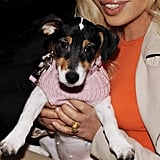 Donatella Versace Visits the Today Show With her Pup