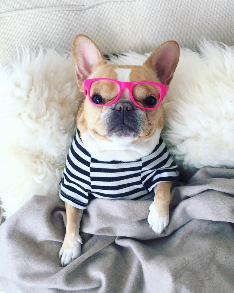 Famous Pets of Instagram