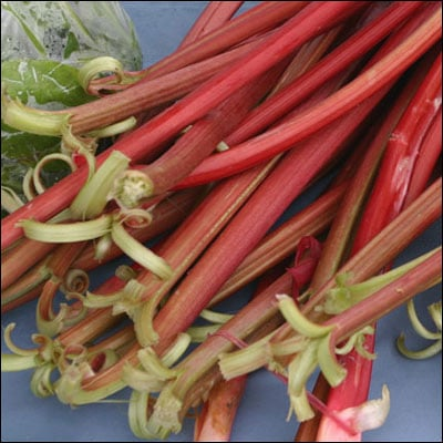 Recipe: Homemade Rhubarb Tea