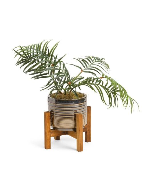 Areca Transparent Lines Plant in Pot