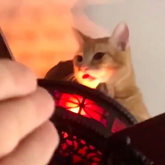 Video of Owner Finding Cat Sitting on Ceiling Fan