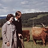 Her majesty owns around 100 Highland cattle