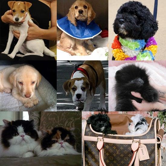 Who Was Your Favorite New Celebrity Pet in 2009?