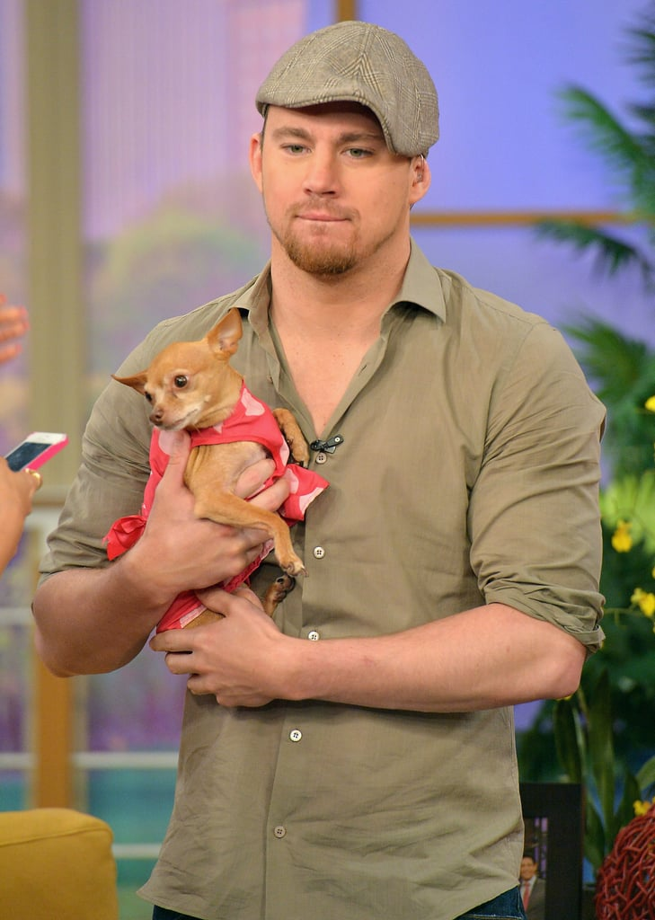 Channing Tatum cuddled a puppy while promoting White House Down during a TV appearance in Miami in June 2013.