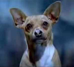 Viva Chihuahuas!