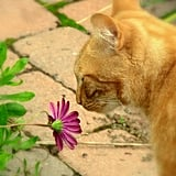 I like my flowers delicate, just like me.  Source: Flickr user *~Dawn~*