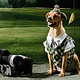 The Golf Dad