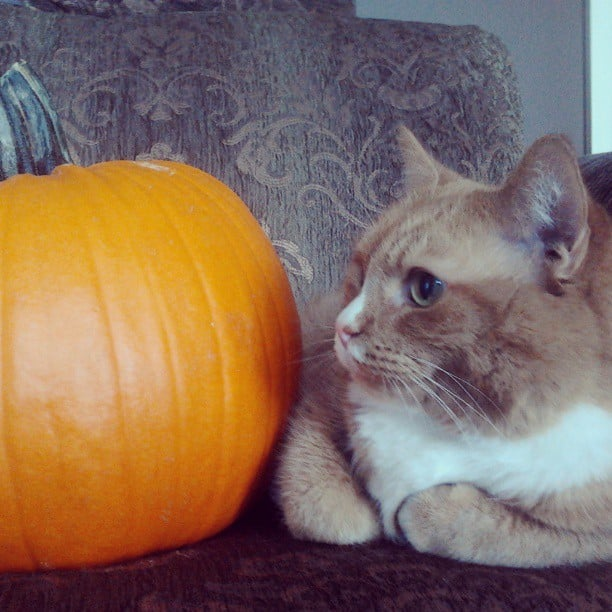 Pumpkins are excellent meditation partners. Source: Instagram user maddycatsxo