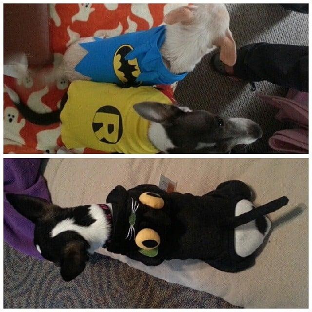 Batman, Robin, and Catwoman