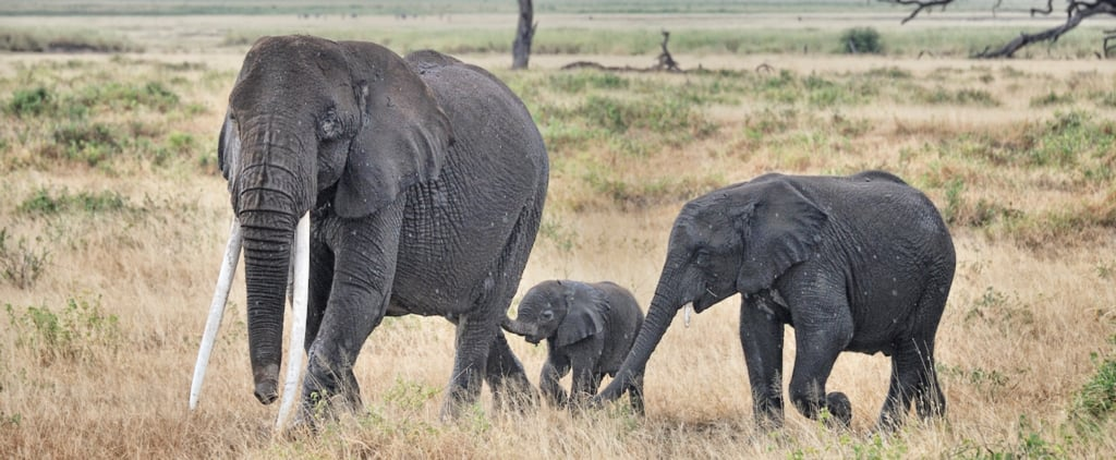 Because We Could All Use Some Baby Elephants in Our Lives
