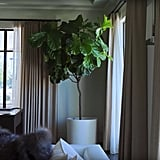 Kourtney brings a little bit of the outside in with plants, like this one in her living room.