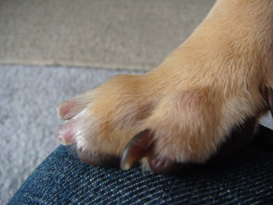 Nail Health for Dogs