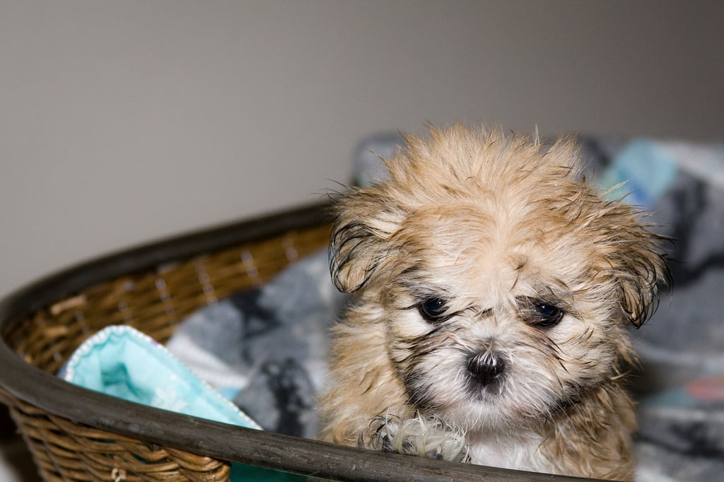 Even the cutest of us get bed head. Source: Flickr user wsilver