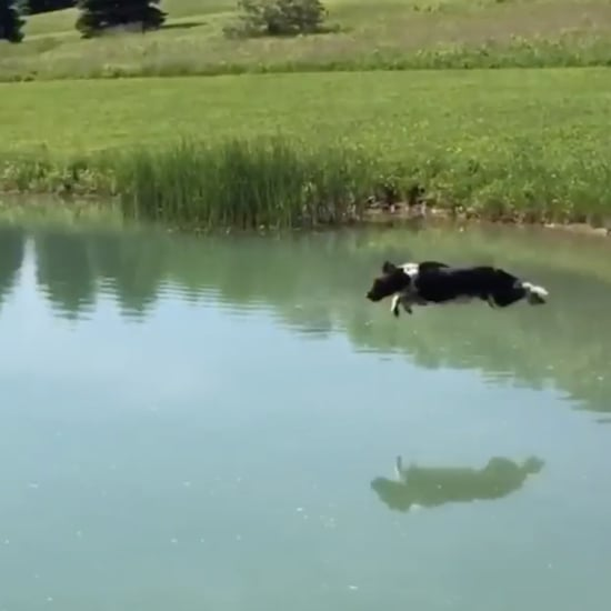 Video of Dog Jumping Into Water Over and Over