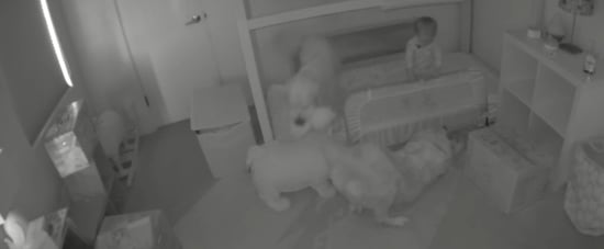 Toddler Escapes Room With Help of Dogs