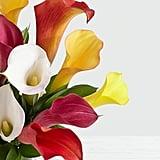 Assorted Mini Calla Lilies