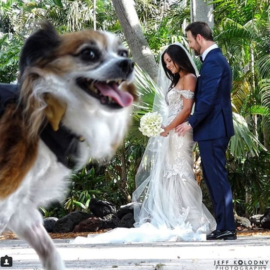 Dogs Photobombing Weddings