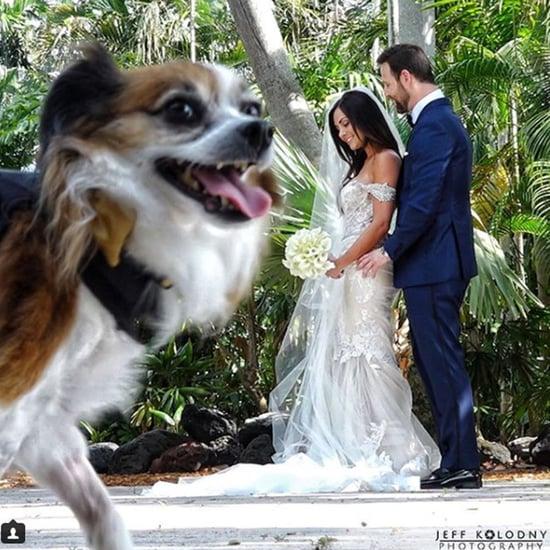 Dogs Photobombing Weddings