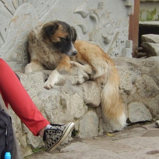 Friendly Street Dogs in Peru