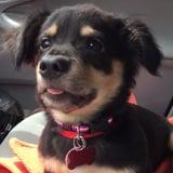 جرو يُظهر غضبه بطريقة لطيفة داخل السيارة