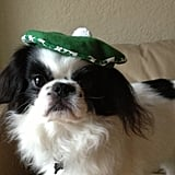 St. Patrick's Day Beret