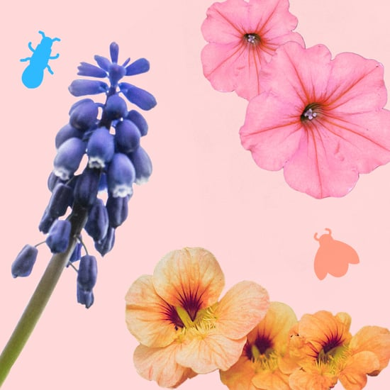 How to Keep Bugs Out of the Garden