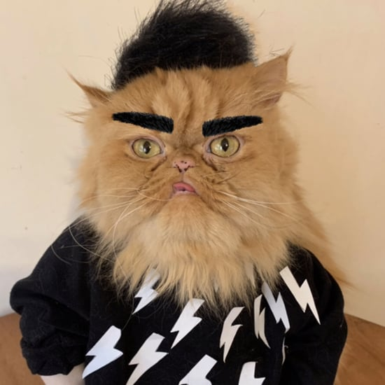 Cat Dressed in Schitt's Creek DIY Halloween Costumes
