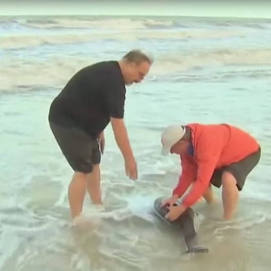 NBC's Kerry Sanders Rescues 2 Dolphins After Hurricane Irma