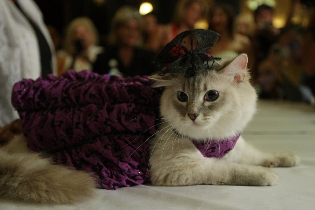 Velveteen Kitty