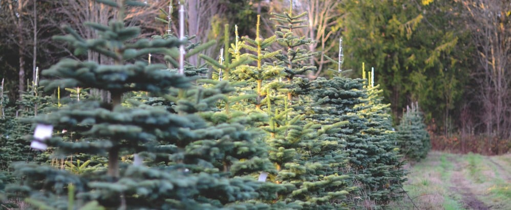 Eek! There Are 25,000 Bugs Lurking in Your Christmas Tree