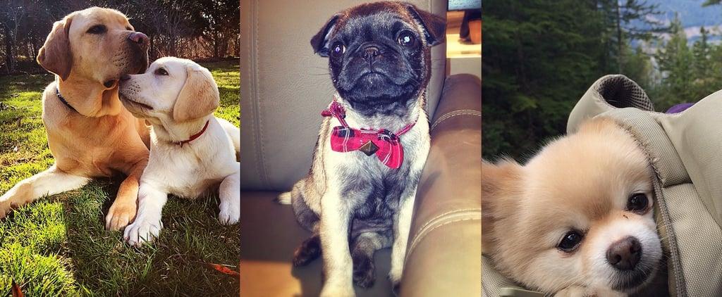 Instagram Dog Accounts
