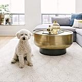Dog Zoom Background