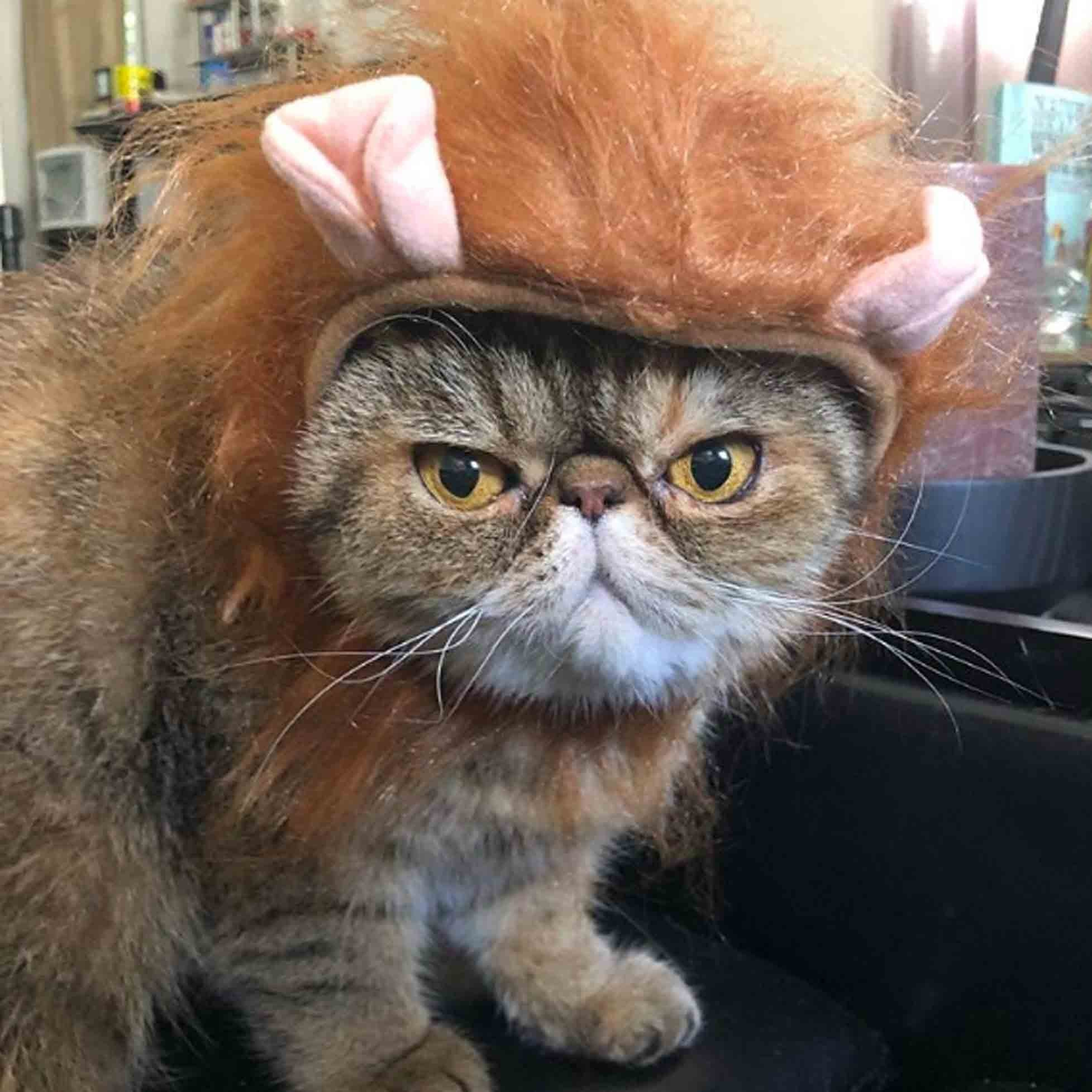 Halloween Costumes For Cats and Kittens