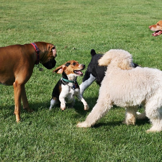 New Dog Park Opens in Dubai